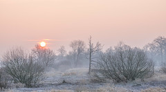 Sunrise (Martine Lambrechts) Tags: sunrise frost nature landscape tree sun morning winter