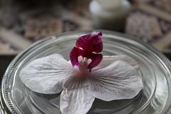 Flower (daveandlyn1) Tags: orhid colours iii f3556 efs1855mm 1200d eos canon