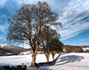 Trees near Balloch Loch (Muthill Roxs) Tags: drummondestate balloch torlum crieff strathearn perthshire