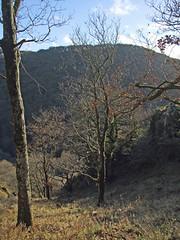 Looking across Teign Gorge from Hunter's Path, near Sharp Tor (Philip_Goddard) Tags: europe unitedkingdom britain british britishisles greatbritain uk england southwestengland devon dartmoornationalpark teignvalley teigngorge hunterspath sharptor drewsteignton