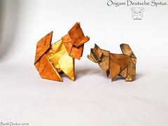 Origami Deutsche Spitze - Barth Dunkan. (Magic Fingaz) Tags: anjing barthdunkan chien chó dog gremlins hond hund köpek origami perro pies пас пес собака หมา 개 犬 狗