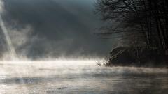 Brumes sur la Cèze. (bertolinijacques) Tags: paysages rivière brume matin contre jour cévennes gard