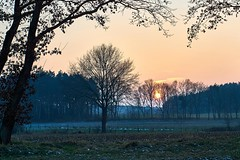 Winter Feld (mechanicalArts) Tags: sunset field sonnenuntergang feld winter 24 35mm carl zeiss jena