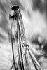 Spinning wheel (Chas56) Tags: blackandwhite structure ferriswheel melbourne movement sky cloud longexposure canon canon5dmkiii