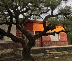 tree (galsafrafoto) Tags: oldtree house traveling argentina colors streetphoto street