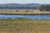 Dixon_JB_040_3185 (Joanne Bouknight) Tags: dixonwaterfowlrefuge hopperlake illinois observationtower thewetlandsinstitute viewfromobservationtower