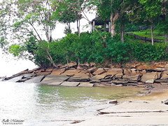 Fossil Beach 2 (Zelle Manzano) Tags: fossils shells beach water ocean sea slabs limestone nature travel adventure seashore susaanhoi banlaempho krabi thailand green trees plants