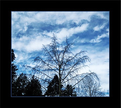 The sky's the limit! (Marcia Portess-Thanks for a million+ views.) Tags: theskysthelimit map marciaportess trees arboles branches painted sky clouds cielo nubes bigsky vancouvercanada