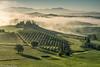 Belvedere - der Morgennebel beginnt sich aufzulösen (AnBind) Tags: 2017 fotoreise ereignisse urlaub arrreisen italien cinqueterreundtoskana orte ausland sanquiricodorcia toscana it