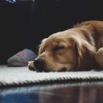 Dog's Nap Time thumbnail
