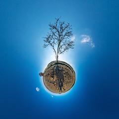 Treeworld (HamburgerJung) Tags: deutschland hugin panorama panasonicgm5 niedersachsen baum winter sonne walimex freihand planet littleplanet stereographic