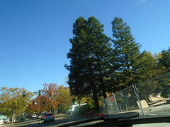 DSC03004 (classroomcamera) Tags: tree trees treetop treetops sky cloudless clear day daytime green blue fall autumn leaves evergreen street streets downtown drive driving passenger look see through watch fence metal road roads shadow shadows