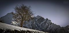 Espinera/ Hawthorne tree (Jose Antonio. 62) Tags: espino hawthornetree nature naturaleza snow nieve mountains montañas picosdeeuropa asturias spain españa