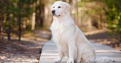 Little Fat , Anjing Yang Memiliki Cara Unik Untuk Meminta Makan (Gitu Aja) Tags: anjing duduk imut