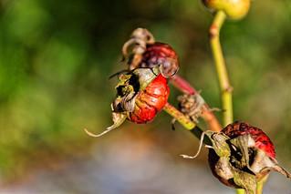 Die Früchte des Vorjahres