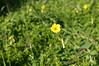 Ψίνθος (Psinthos.Net) Tags: ψίνθοσ psinthos ιανουάριοσ γενάρησ january winter χειμώνασ φύση εξοχή nature countryside afternoon απόγευμα απόγευμαχειμώνα χειμωνιάτικοαπόγευμα λουλούδια άγριαλουλούδια αγριολούλουδα wildflowers yellowflowers κίτριναλουλούδια χόρτα greens pollen γύρη field χωράφι οξαλίδεσ οξαλίδα sorrels sorrel ξυνιέσ ξινιέσ ξινάκια ξυνάκια ηλιόλουστημέρα sunnyday φώσ φώσήλιου φώσηλίου sunlight light