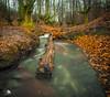 Hayedo de Otzarreta II (Jose Peral Merino) Tags: hayedodeotzarreta vizcaya paisvasco río haya bosque hojas tronco hdr largaexposicióndiurna agua