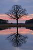 IMG_6187 (geraldtourniaire) Tags: 24105l landschaft licht 6d canon sonnenaufgang baum franken