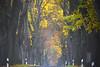 autumn is coming soon (NPPhotographie) Tags: nature art creative oberberg npp allee autumn fall fog mist dust magic magical