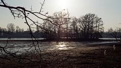 BS-Riddagshausen, Naherholungsgebiet (bleibend) Tags: 2018 bs braunschweig bsriddagshausen riddagshausen naherholungsgebiet naherholung natur nature naturschutzgebiet landschaftsschutzgebiet olympus omd em5 olympusomd olympusem5 mft m43 m43cameras leica leicasummilux25mmf14