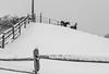 Horses On The Hilltop (John Kocijanski) Tags: snow winter horses animals blackandwhite fence hff canon24105mmf4l canon5dmkii sullivancounty