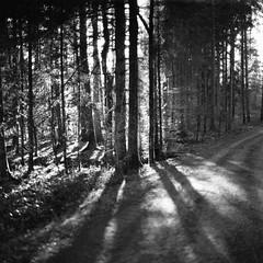 in the forest (gato-gato-gato) Tags: 35mm 6x6 75mm ch iso800 ilford ls600 nikkorp nikkorp12875mm nikon noritsu noritsuls600 s2a slr switzerland wetzikon zenzabronica zenzabronicas2a analog analogphotography believeinfilm film filmisnotdead filmphotography flickr gatogatogato gatogatogatoch homedeveloped mediumformat tobiasgaulkech wwwgatogatogatoch zürich schweiz black white schwarz weiss bw blanco negro monochrom monochrome blanc noir streetphotography street strasse strase onthestreets streettogs streetpic streetphotographer mensch person human pedestrian fussgänger fusgänger passant suisse svizzera sviss zwitserland isviçre zuerich zurich zurigo zueri landschaft landscape landscapephotography outdoorphotography