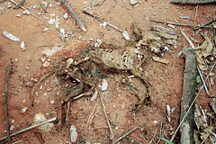 cachorro021 (Marcelo Alves - Fotógrafo) Tags: marceloalves marceloalvesfotografo fotografomarceloalves cachorro morte kill dog