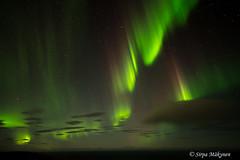 Nordkapp tulet 4 (sirpamak) Tags: norja norway northernlights revontulet auroraborealis aurora syksy autumn
