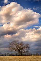 Winter Tree 3-0 F LR 2-21-18 J013 (sunspotimages) Tags: tree trees sky clouds cloud landscape winterlandscape winter storm