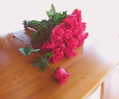 Let's pack the flowers. (denise.bardauil) Tags: mesa rosas vermelho