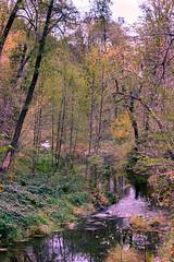 Peaceful Stream (Carl Cohen_Pics) Tags: westforktrail sedona arizona fall stream trees forest foliage nature naturephotography canon canon7dmarkii leaves creek