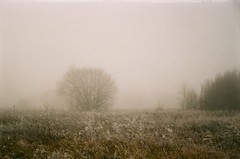 fog and frost (szmenazsófi) Tags: smenasymbol smena lomo analog analogue film 35mm agfa agfavistaplus outdoor landscape winter wintry fog foggy frost frosty nature field mist misty ice december kőszeg hungary