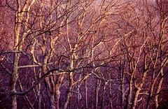 2018-02-10-0035 (teresa sorbilli) Tags: film ektar kodak nikon n65 nc mountains woodland sunrise light shadow