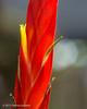 Vriesea splendens (Fatima Sandrin) Tags: 2017 botânica jbmb jardimbotânico jardimbotânicomunicipaldebauru científica coleção conservação documentação educaçãoambiental flores fotografia imagem lazer pesquisa plantas preservação vegetal vegetação ©2017fátimasandrin árvores