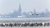 Ganzen (JaapWoets) Tags: agrarisch ganzen kerk landschap weiland winter vogels