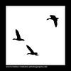silhouette (H. Roebke) Tags: 2018 minimalismus de minimalism gänse weiss abstrakt bird germany schwarzweiss schwarz goose blackwhite abstract vogel