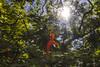 Orange flower (Wal Wsg) Tags: orange orangeflower flowers flower flowerorange flornaranja naranja laflor sol sun naturaleza nature natural naturale natura flor flores floresflowers flora florflower 7dwf 7dwfflora phwalwsg argentina argentinabsas buenosaires caba capitalfederal ciudadautonoma ciudaddebuenosaires palermo rosedaldepalermo canoneosrebelt3 dia day photography photo