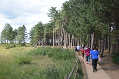Holkham Pines (Worthing Wanderer) Tags: norfolk summer sunny farmland coast seaside nelson holkham burnham hero august