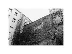 Living wall (kotmariusz) Tags: ivy bricks wall decay monochrome blackandwhite monochromatic analog 35mm ilfordpan400 olympusom40 ściana cegły mur bluszcz polska świdnica bw