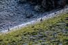 Frontière imaginaire (Amylee_90) Tags: frontière givre gel ice nature ligne séparation herbe symétrie