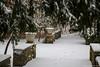 samsebeskazal-2183.jpg (samsebeskazal) Tags: winter newjersey ringwood