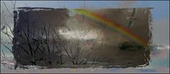 WHERE TROUBLE MELTS LIKE LEMON DROPS (Poppy ♥ Cocqué ♫) Tags: rainbow ap himadri birthday bird silhouettes trees art sky sun p🍀ppy poppy
