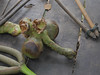 P1240423.jpg (vickydoc) Tags: lingas rivièrekbalspean cascade siemreap rivièreauxmillelingas cambodia angkor cambodge vishnou banteaysrei siemreapprovince kh