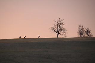 Dans l'aube rose