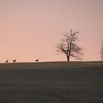Dans l'aube rose thumbnail