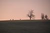 Dans l'aube rose (Croc'odile67) Tags: nikon d3300 sigma contemporary 18200dcoshsmc paysage landscape ciel sky animaux arbres trees h