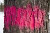 Death (Solojoe) Tags: death tree red paint redpaint tagged tag removal forest graveyard bark stjoachimcemetery stjoachim edmontonalberta