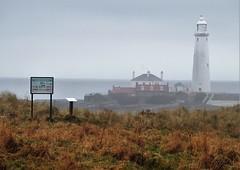 St. Mary's Lighthouse from Coastal Grassland Sign (Gilli8888) Tags: northeast coast coastal nikon p900 coolpix whitleybay tyneandwear stmaryslighthouse stmarysisland lighthouse buildings sign coastalgrasslands northsea