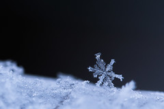 Snowflake (cosovan.vadim) Tags: macro snow flake nature nikon d750 tamron 90mm f28 ice crystal snowflake