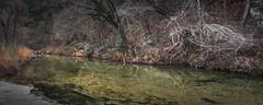 Tangled (keith_shuley) Tags: winter barren creek stream bullcreek green orange austin texas texashillcountry
